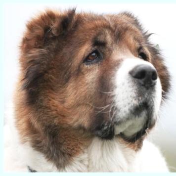 Чупа Чупс - Собаки в добрые руки