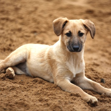Бруня - Собаки в добрые руки