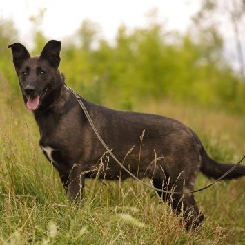 Норка - Собаки в добрые руки