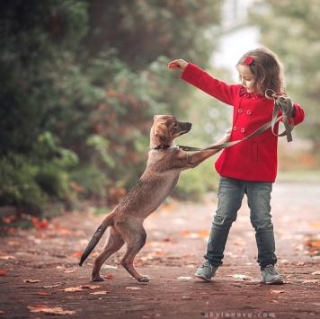 Джета - Собаки в добрые руки
