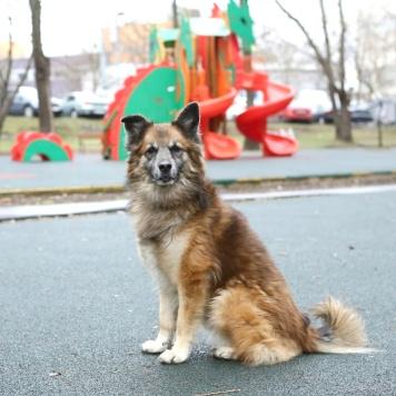 Тин - Собаки в добрые руки