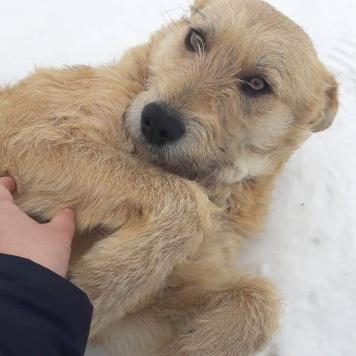 Маришка - Собаки в добрые руки