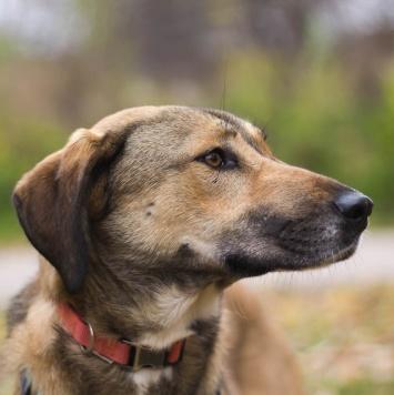 Лурдес - Собаки в добрые руки