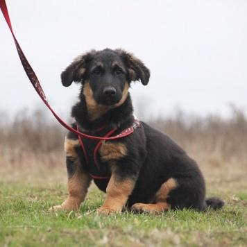 Орион - Собаки в добрые руки