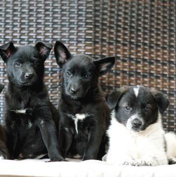 Очаровательные малыши - Собаки в добрые руки