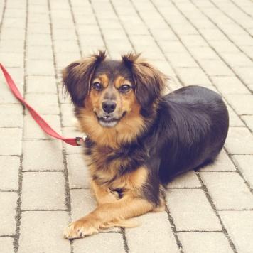 Читта - Собаки в добрые руки