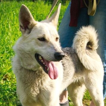Ийка - Собаки в добрые руки