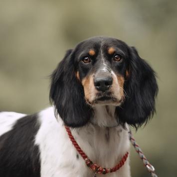 СанМартин - Собаки в добрые руки