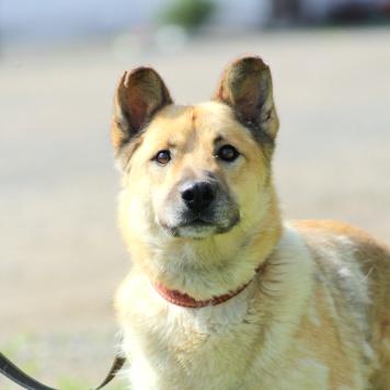 Римуру - Собаки в добрые руки