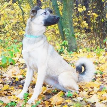 Руся - Собаки в добрые руки