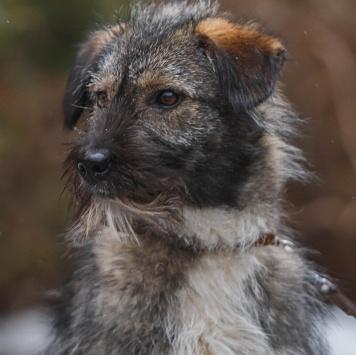 Агаша - Собаки в добрые руки