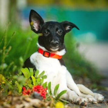 Нюша - Собаки в добрые руки