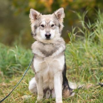 Сюрприз - Собаки в добрые руки
