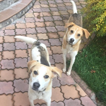 Белка и Стрелка - Собаки в добрые руки