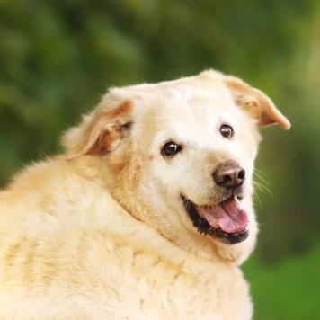 Ривви - Собаки в добрые руки