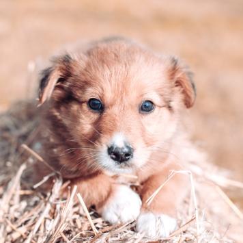 Арамис - Собаки в добрые руки