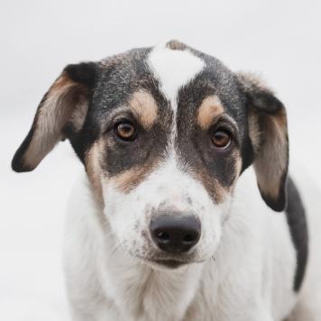 Лапша - Собаки в добрые руки