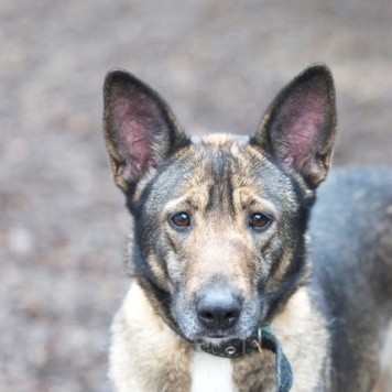 Аттика - Собаки в добрые руки