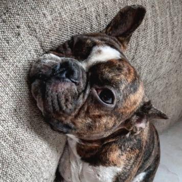 Лёвик - Собаки в добрые руки