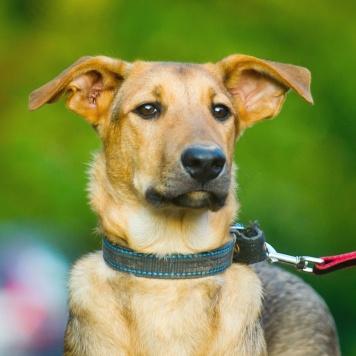 Скуби - Собаки в добрые руки