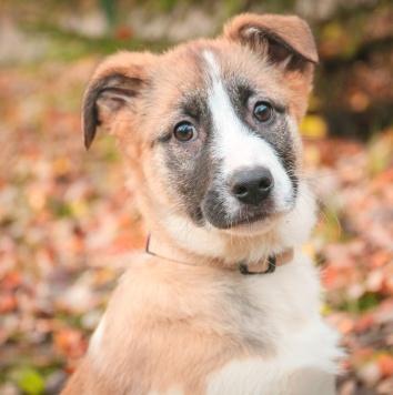 Карамельки - Собаки в добрые руки
