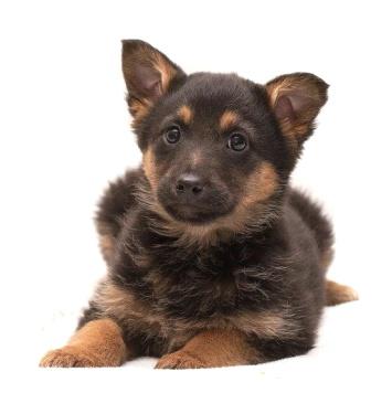 Чери - Собаки в добрые руки