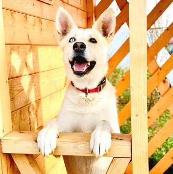 Мариус - Собаки в добрые руки