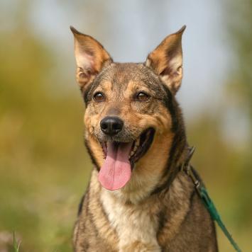 Изюма - Собаки в добрые руки