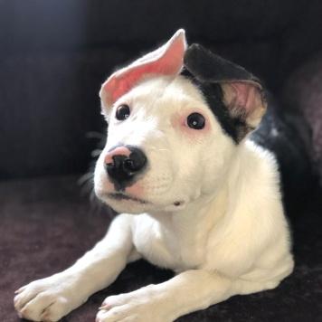 Петра - Собаки в добрые руки