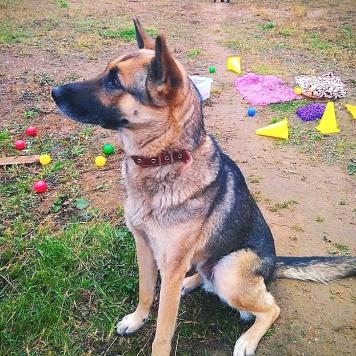 Лора Крафт - Собаки в добрые руки