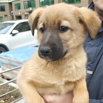 Оскар - Собаки в добрые руки
