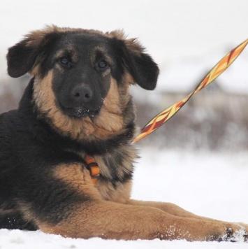 Андромеда - Собаки в добрые руки