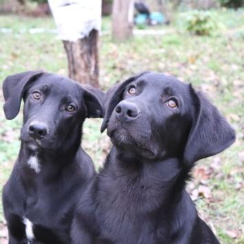 Гошка и Платошка - Собаки в добрые руки