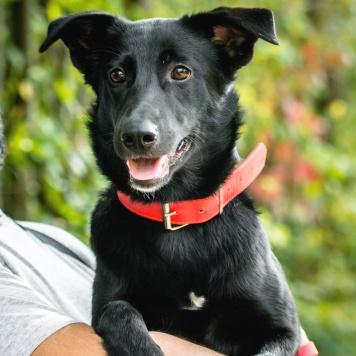 Рия - Собаки в добрые руки