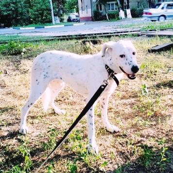 Грейс - Пропавшие собаки