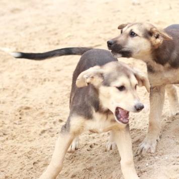 Гензель и Гретель - Собаки в добрые руки