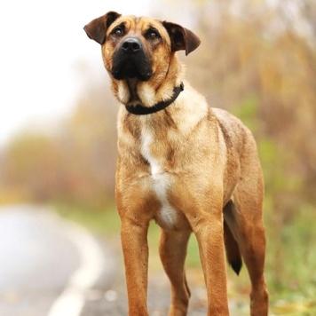 Форос - Собаки в добрые руки