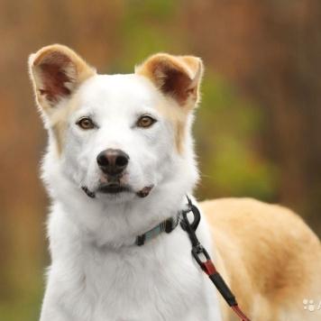 Шейх - Собаки в добрые руки