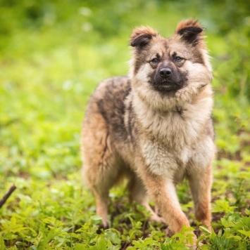 ЛилиЛулу - Собаки в добрые руки