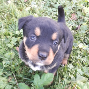 Лапуля - Собаки в добрые руки