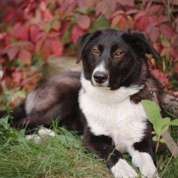 Шикарная Шанни - Собаки в добрые руки