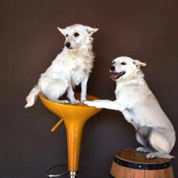 Бэлла и Каспер - Собаки в добрые руки