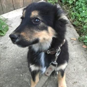Боди - Собаки в добрые руки