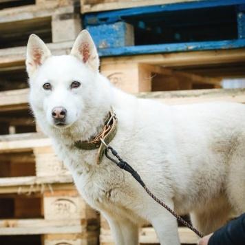 Ланушка - Собаки в добрые руки