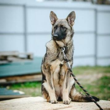 Самбушка - Собаки в добрые руки