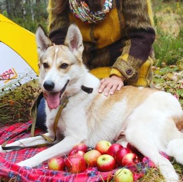 Оливка - Собаки в добрые руки