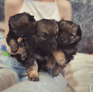 Нет клички - Собаки в добрые руки