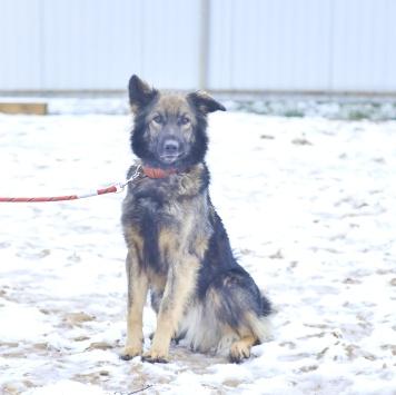 Максик - Собаки в добрые руки