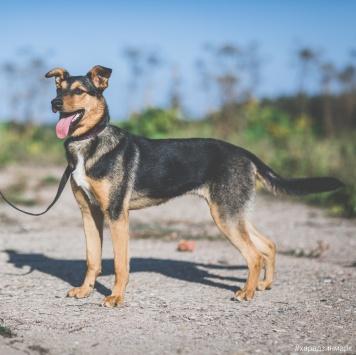 Салли - Собаки в добрые руки