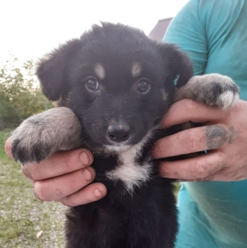 Красавчик Арчи - Собаки в добрые руки